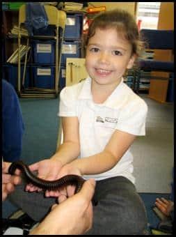 Child handling African Giant Black Millipede