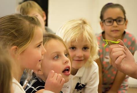 Children looking at Praying Mantis at party