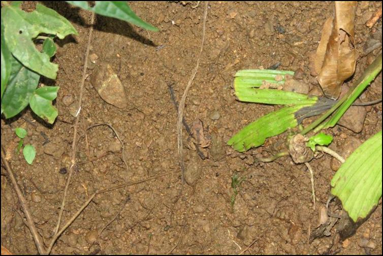 Camouflaged frog - 3