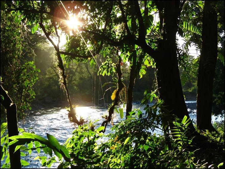 Costa Rica Jungle and River