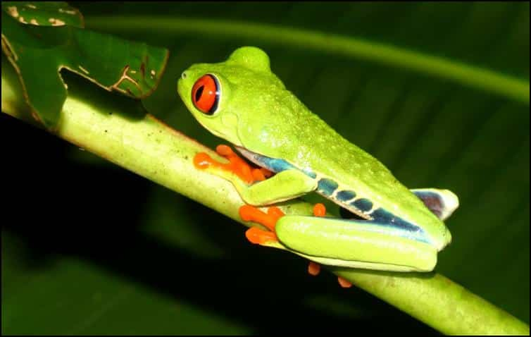 Tree frog side view