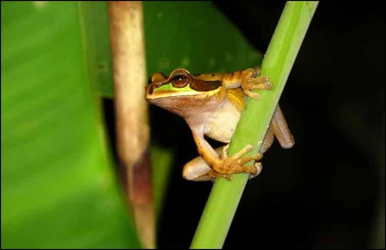 Underside of tree frog