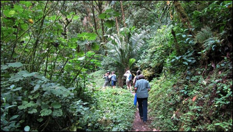 Exploring the rain forest