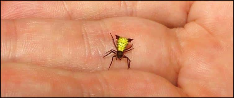 Another tiny spider in Jonathan's hand