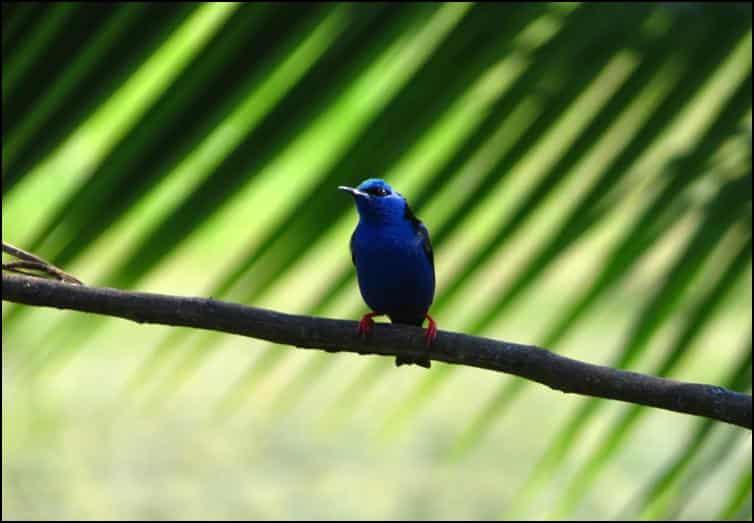 Unidentified blue bird