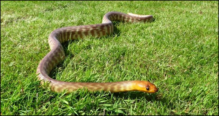 Woma on grass