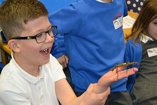 Child handling a stick insect