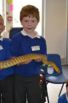 Child handling a Woma