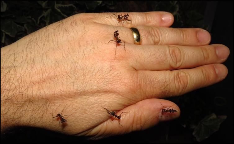 Nymph Dead Leaf Praying Mantis