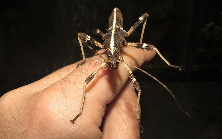 Sunny Stick Insect