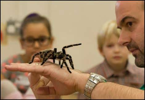 Jonathan with a Tarantula on the back of his hand