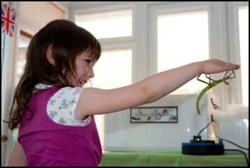 Child holding a stick insect