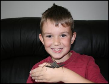 Tailless Whip Scorpion being held by a child
